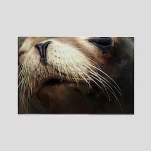 CUTE SEA LION Rectangle Magnet