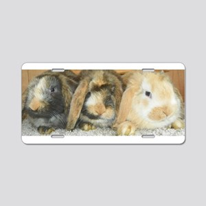 Harlequin Mini Lop Trio Aluminum License Plate