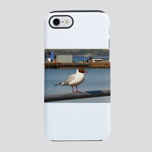 Black-headed gull, Scotland iPhone 8/7 Tough Case