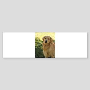 golden retriever n Bumper Sticker