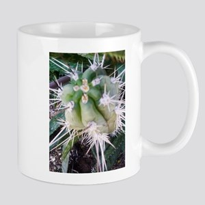 Mexican Toothpick protruding upwards in Aloe Mugs