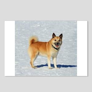 IcelandicSheepdog018 Postcards (Package of 8)
