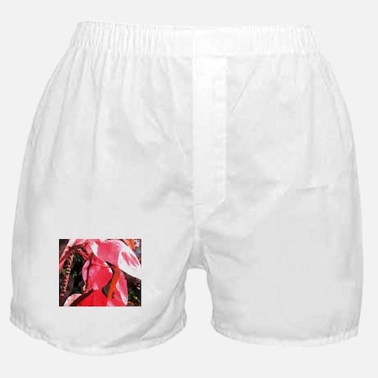 copperleaf Boxer Shorts