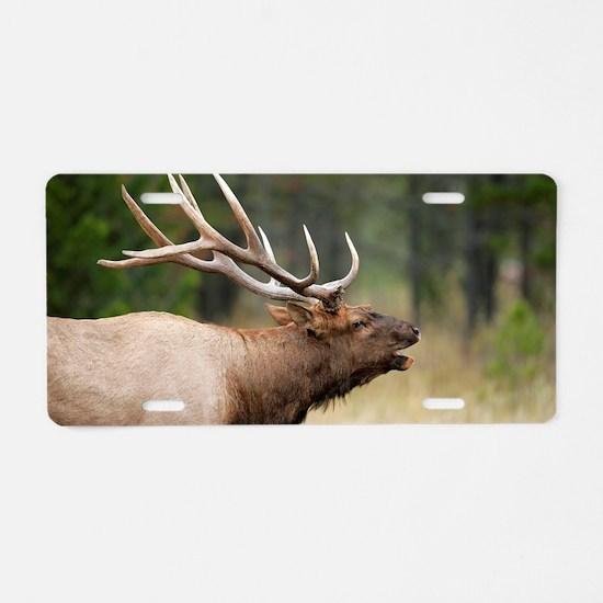 Cute Antlers Aluminum License Plate