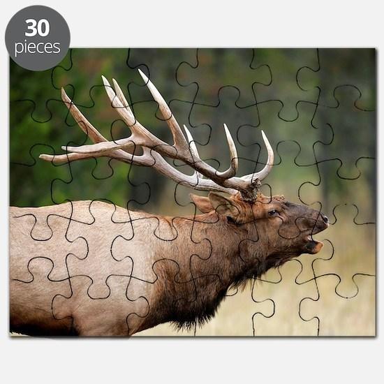 Cute Animals and wildlife Puzzle