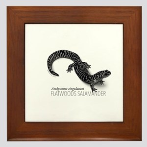 Ambystoma Cingulatum Framed Tile