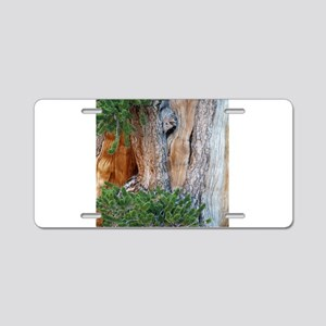 Bristlecone Pine Aluminum License Plate
