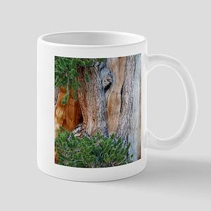 Bristlecone Pine Mugs