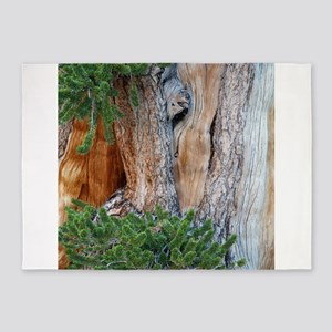 Bristlecone Pine 5'x7'Area Rug