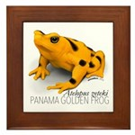 Atelopus Zeteki | Panamanian Golden Framed Tile