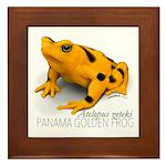 Atelopus Zeteki   Panamanian Golden Framed Tile
