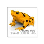 Atelopus Zeteki | Panamanian Golden Frog Sticker