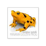 Atelopus Zeteki   Panamanian Golden Frog Sticker