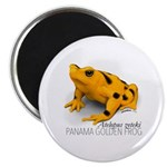 Atelopus Zeteki | Panamanian Golden Frog Magnets
