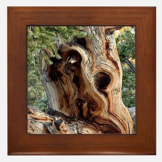 Cute Joshua tree national park Framed Tile