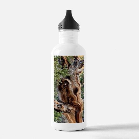 Unique Bark Water Bottle