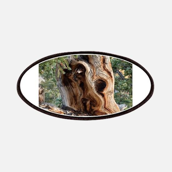 Bristlecone Pine Patch