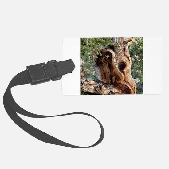 Bristlecone Pine Luggage Tag