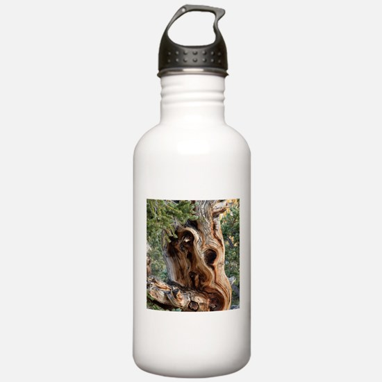 Bristlecone Pine Water Bottle
