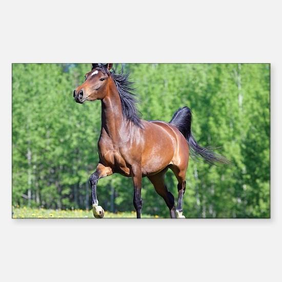 Unique Arabian horse Sticker (Rectangle)
