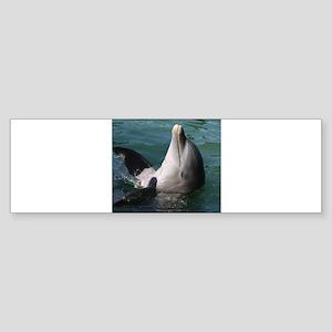 Dolphin20151015 Bumper Sticker