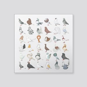 "36 Pigeon Breeds Square Sticker 3"" X 3"""