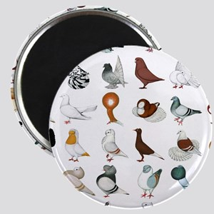 36 Pigeon Breeds Magnet Magnets