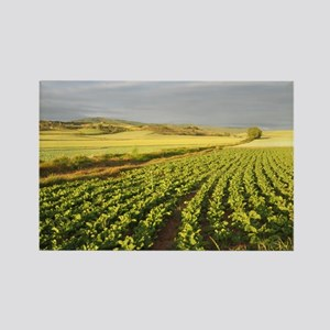 Camino Green Field Rectangle Magnets