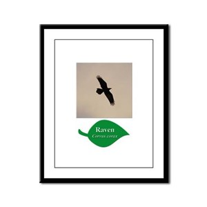 Flying Raven Framed Panel Print