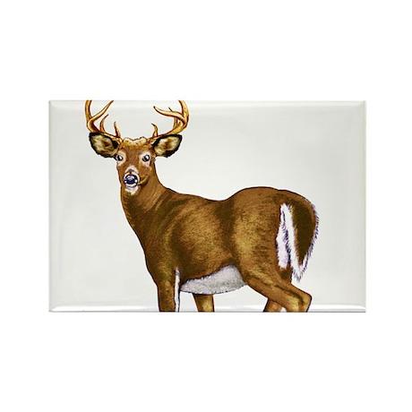 American White Tail Deer Buck Rectangle Magnet (10