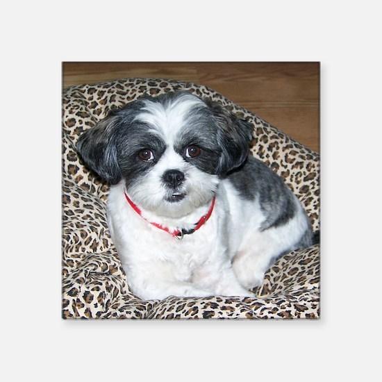 Shih Tzu Dog Photo Sticker