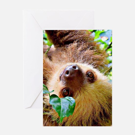 awesome Sloth Greeting Cards