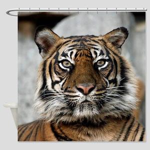 Tiger009 Shower Curtain