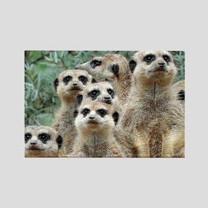 Meerkat012 Magnets