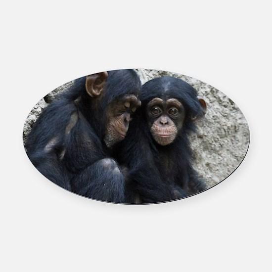 Chimpanzee002 Oval Car Magnet