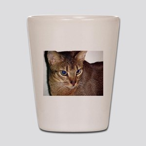 abyssinian second Shot Glass