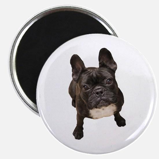 Cute French bulldog Magnet