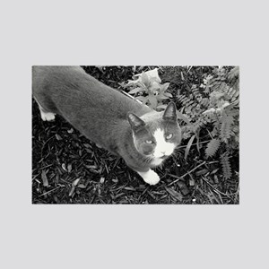Little Grey Cat Rectangle Magnet