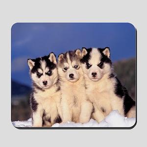 Three Husky puppies Mousepad