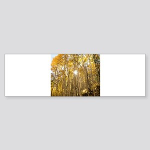Aspens and Sunshine Bumper Sticker