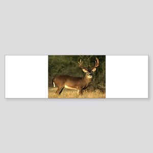 Beautiful Buck Bumper Sticker