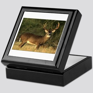 Beautiful Buck Keepsake Box