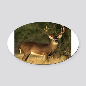 Beautiful Buck Oval Car Magnet