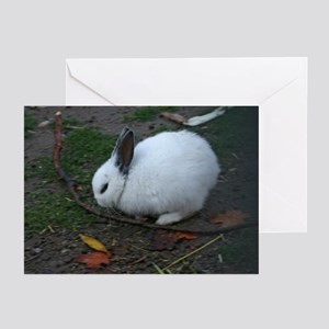 Rabbit Sympathy Cards (Pk of 10)