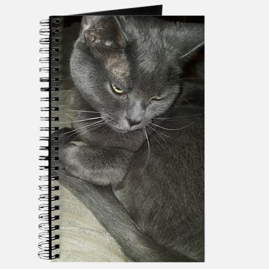 Funny Russian blue cat Journal