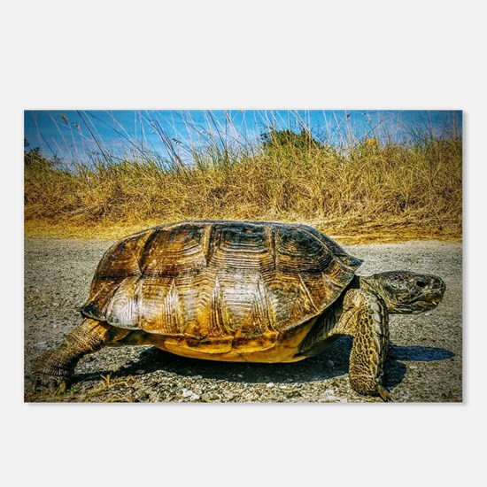 Fernandina Beach Turtle Postcards (Package of 8)