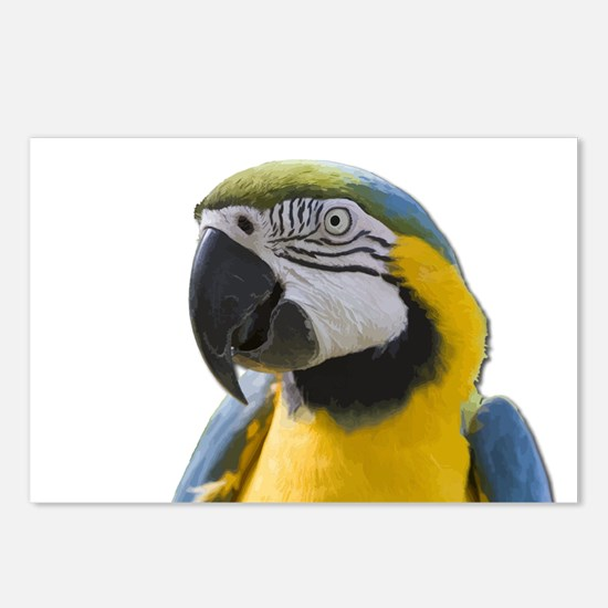 Blue and Yellow Macaw Thi Postcards (Package of 8)
