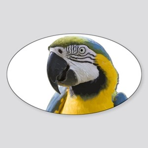 Blue and Yellow Macaw Thinking Sticker