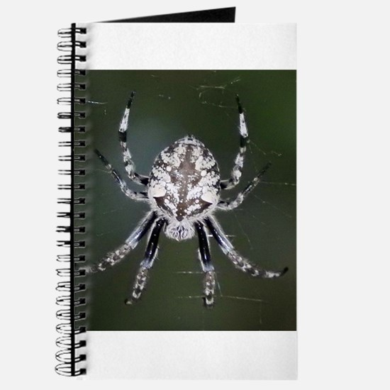 Spider at Night Journal