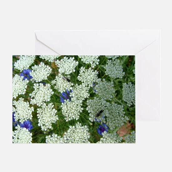 1032 Queen Annes Lace Greeting Card